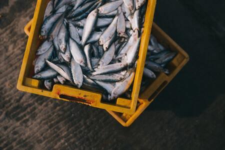 RECY'FISH, valorisation des coproduits de la mer.